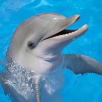 Delfín v přímém přenosu zachránil iPhone padající ke dnu moře