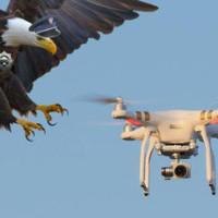 VIDEO: Nizozemská policie trénuje orly na odchyt dronů