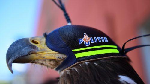 Nizozemská policie přestala trénovat orly na chytání dronů